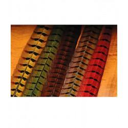 Pluma faisan AGC de colores