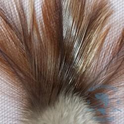Pluma de Gallo de León. Indio avellanado